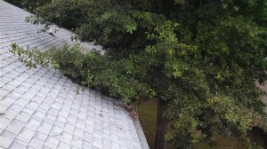 Tree limbs touching the roof